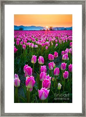 Skagit Valley Dawn Framed Print by Inge Johnsson