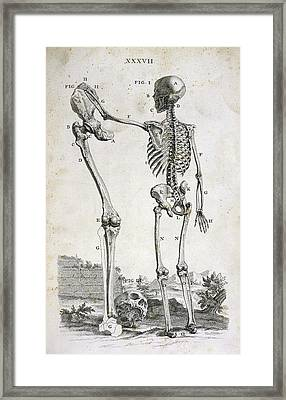 Skeleton And Giant's Leg Framed Print by British Library