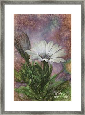 Sketchy Daisy In Mother Of Pearl Framed Print by Lois Bryan