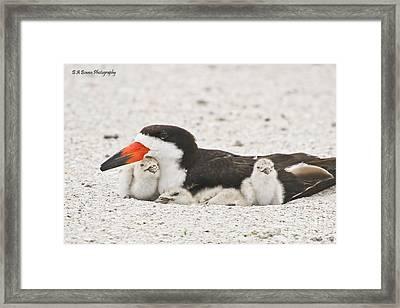 Skimmer Family Cuddle Framed Print by Barbara Bowen
