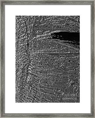 Skin No.18 Effect Framed Print by Fei A