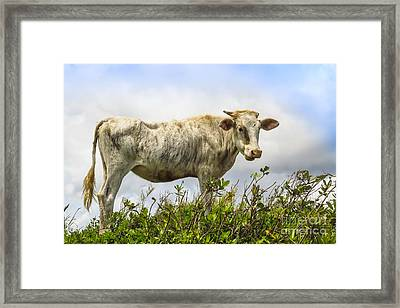 Eat Free Framed Print featuring the photograph Skinny But Happy by Patricia Hofmeester