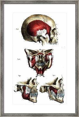 Skull Anatomy Framed Print by Collection Abecasis