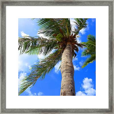 Sky And The Coconut Tree Framed Print by Juan Jiang