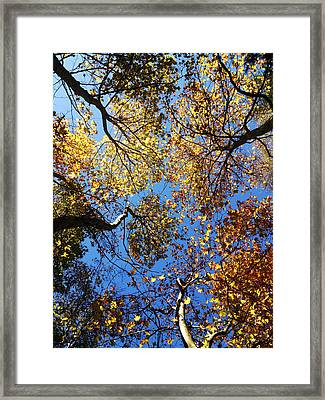 Sky Is The Limit Framed Print by Lucy D