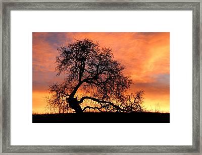 Sky On Fire Framed Print by Priya Ghose