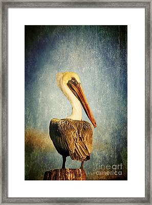 Sky Watcher Framed Print by Joan McCool
