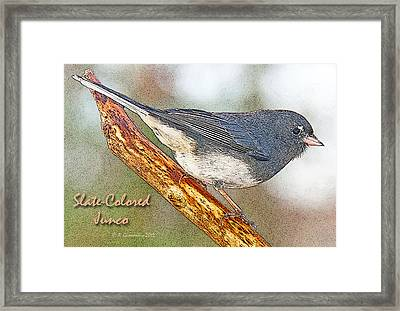 Framed Print featuring the photograph Slate-colored Junco Poster Image by A Gurmankin