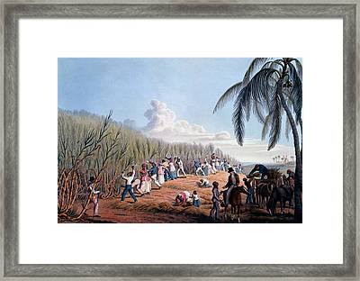 Slaves Cutting The Cane, From Ten Views Framed Print by William Clark