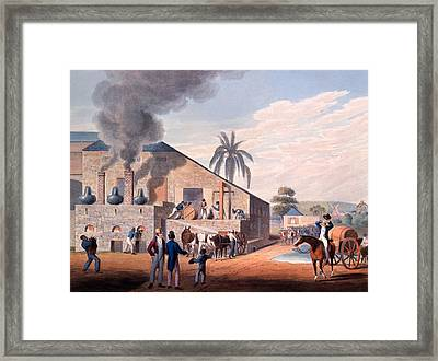 Slaves Set To Work Producing Rum Framed Print by William Clark