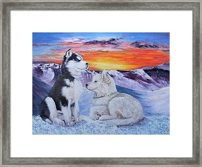 Sled Dog Dreams Framed Print by Karen  Peterson