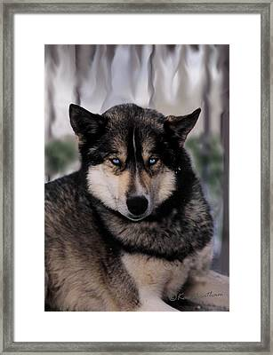 Sled Dog Resting Framed Print by Kae Cheatham