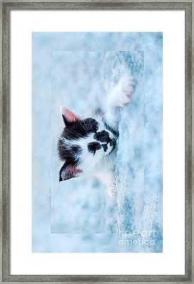 Sleeping Black And White Kitten On Blue Plush Bed Larger Iphone Case Framed Print by Iris Richardson