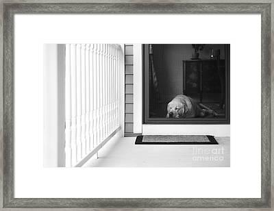 Sleeping Dog Framed Print by Diane Diederich