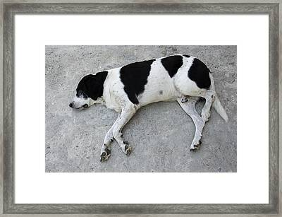 Sleeping Dog Lying On The Ground Framed Print by Matthias Hauser