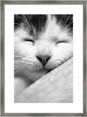 Sleeping Kitten Framed Print by Martin Capek