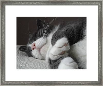 Sleeping Morty Framed Print by Guy Ricketts