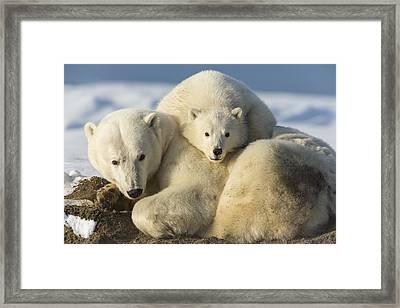 Sleeping On Mom Framed Print by Tim Grams