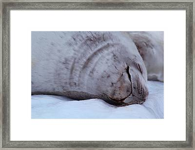 Sleeping Seal Framed Print by FireFlux Studios