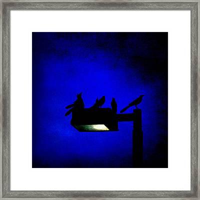 Sleepless At Midnight Framed Print by Trish Mistric
