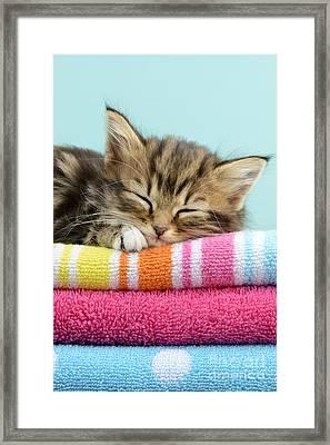 Sleepy Kitten Framed Print by Greg Cuddiford