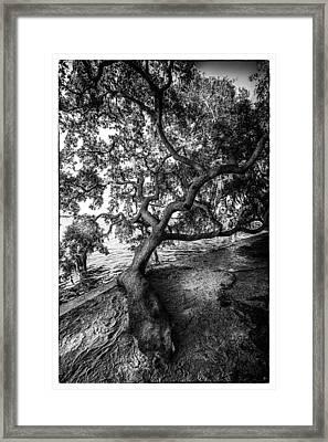 Sleepy Oak Framed Print by Marvin Spates