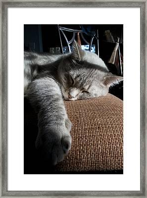 Sleepy Time Framed Print by Matt Radcliffe