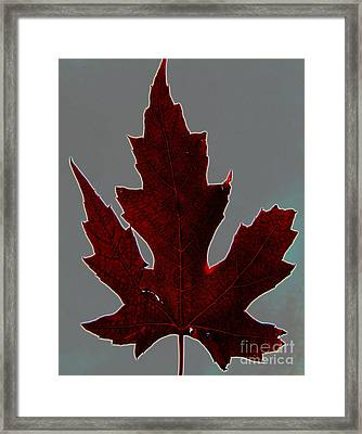 Slender And Pretty Framed Print by Tina M Wenger