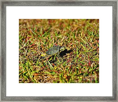 Slider To Go Framed Print by Al Powell Photography USA
