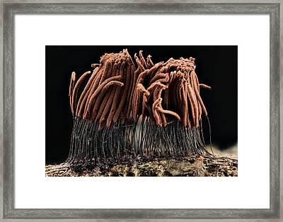 Slime Mould Framed Print by Us Geological Survey
