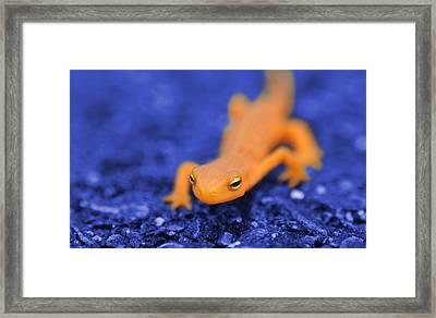 Sly Salamander Framed Print by Luke Moore