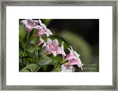 Small Flowers Framed Print by Joy Watson