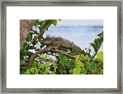 small Godzilla Framed Print by Chuck  Hicks