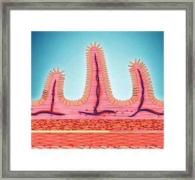 Small Intestinal Wall Framed Print by Pixologicstudio