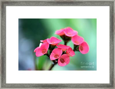 Small Red Flower Framed Print by Henrik Lehnerer
