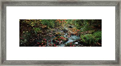 Small Stream In Fall, Upper Peninsula Framed Print by Panoramic Images