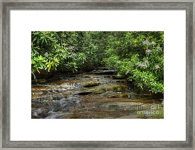 Small Stream In West Virginia With Mountain Laurel Framed Print by Dan Friend