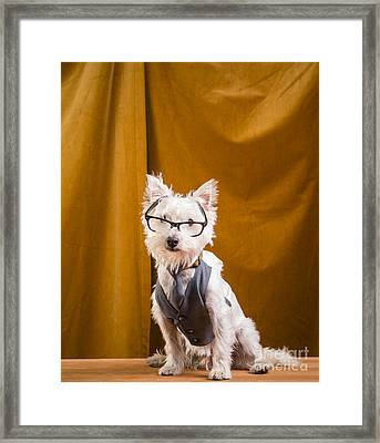 Small White Dog Wearing Glasses And Vest Framed Print by Edward Fielding