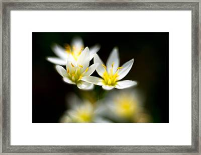 Small White Flowers Framed Print by Darryl Dalton
