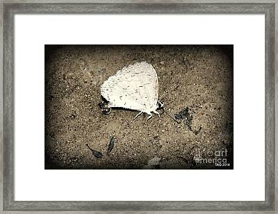 Small Wonder Framed Print by Tami Quigley