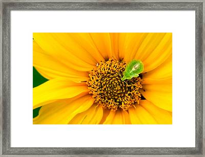 Small World Framed Print by Adam Romanowicz