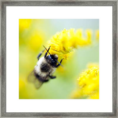 Small World Framed Print by Diane Miller