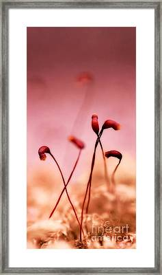 Small World Framed Print by Priska Wettstein