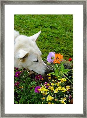 Smell The Flowers Framed Print by Thomas R Fletcher
