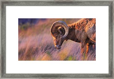 Smell The Wind Framed Print by Kadek Susanto