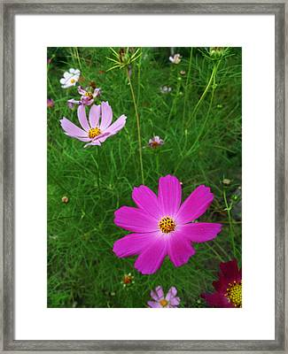 Smiles Framed Print by Lucy D