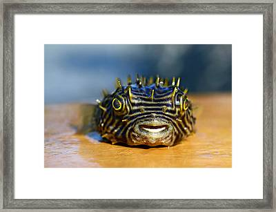 Smiley Framed Print by Laura Fasulo