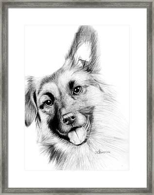 Smiling Puppy Framed Print by Kayleigh Semeniuk