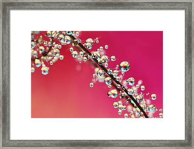 Smoking Pink Drops II Framed Print by Sharon Johnstone