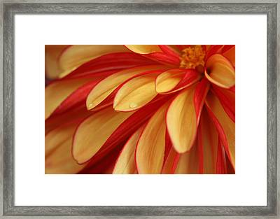 Smooth As Butter  Framed Print by Connie Handscomb